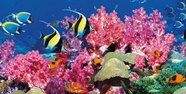 Barrière-de-corail-en-Australie