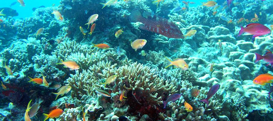 corail de l'Australie