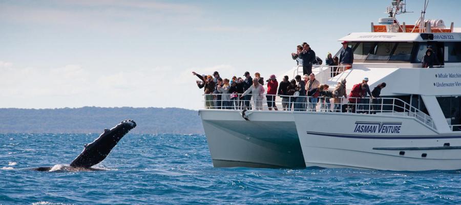 Une croisière pour contempler les groupes de baleines